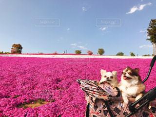 バック グラウンドでレトバ湖と犬の横に座っているぬいぐるみの動物のグループの写真・画像素材[1186291]
