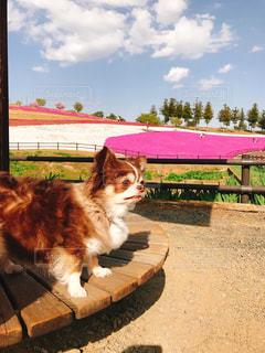 ベンチに座っている犬の写真・画像素材[1186440]