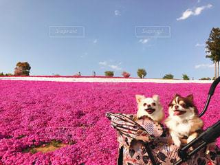 バック グラウンドでレトバ湖と犬の横に座っているぬいぐるみの動物のグループの写真・画像素材[1186455]