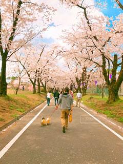 木の隣に道を歩いている人の写真・画像素材[1186508]