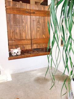 木製の椅子の上に座っている猫の写真・画像素材[1186660]