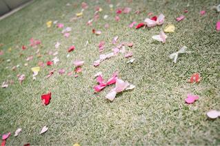 草の上に横になっているテディベアにフィールドが覆われています。の写真・画像素材[1229855]