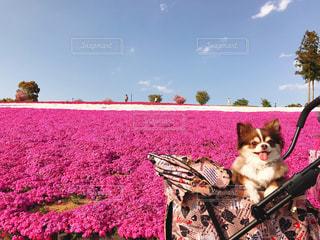 草の中に座っている犬の写真・画像素材[1380338]