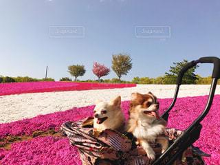 草の中に座っている犬の写真・画像素材[1380342]