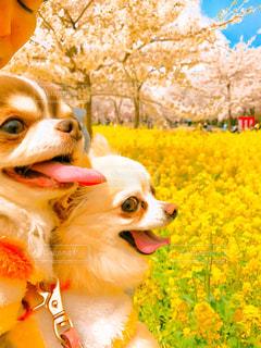近くに犬のアップの写真・画像素材[1388919]