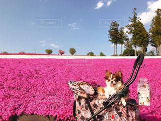 草の上に座って猫対象フィールドの写真・画像素材[1398825]