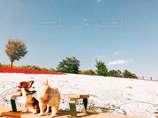 砂浜の上に座っている犬の写真・画像素材[1404485]