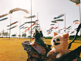 草の中に座っている犬の写真・画像素材[1405354]