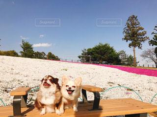 ベンチに座っている犬の写真・画像素材[1595986]