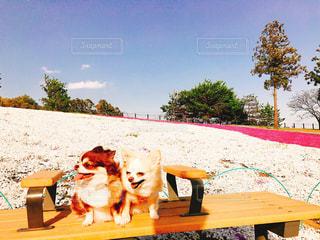 ベンチに座っている犬の写真・画像素材[1595991]