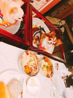 犬,食べ物,チワワ,ディナー,皿,ご飯,料理,お肉