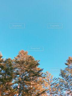 近くの木のアップの写真・画像素材[1685279]