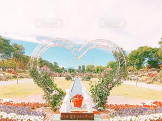 空,公園,花,屋外,綺麗,薔薇,樹木,ハート,flower,草木,ガーデン
