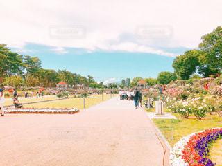 風景,空,公園,花,木,屋外,ピンク,赤,散歩,薔薇,可愛い,お散歩