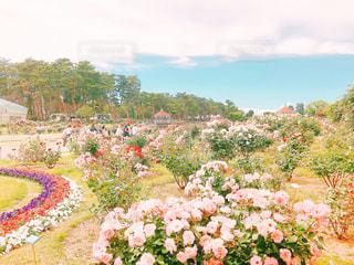 空,公園,花,カラフル,綺麗,フラワー,散歩,薔薇,可愛い,屋上,お散歩