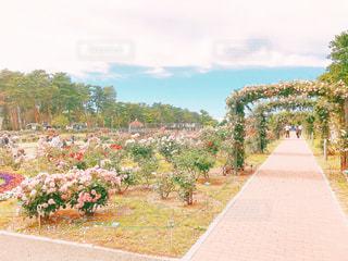 空,公園,花,ピンク,カラフル,綺麗,フラワー,散歩,薔薇,可愛い,屋上,お散歩