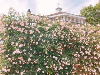 花園のクローズアップの写真・画像素材[2273233]