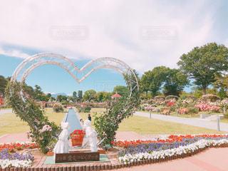 空,公園,花,屋外,ピンク,カラフル,綺麗,フラワー,散歩,薔薇,可愛い,お散歩