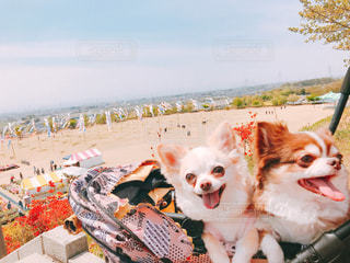 犬の隣に座っているぬいぐるみのグループの写真・画像素材[2273574]