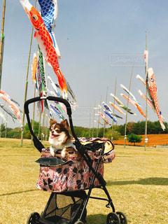 凧を飛ばす人の写真・画像素材[2274143]