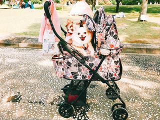 草の上に座っている小さな子供の写真・画像素材[2274489]