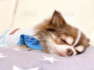 犬の写真・画像素材[2758737]