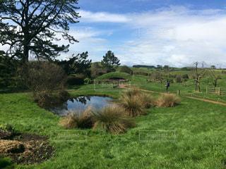 風景,屋外,景色,観光,新緑,海外旅行,ニュージーランド,草木,のどか,日中,ロードオブザリング,ホビット