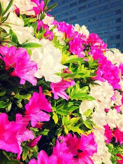 花,春,浜松町,2018年4月