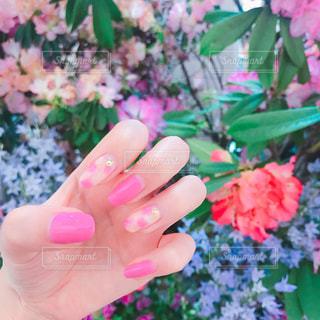 指先にも花が咲くの写真・画像素材[1150135]