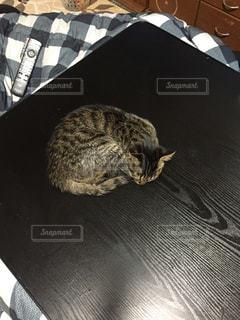 こたつの上で寝る猫の写真・画像素材[1770052]