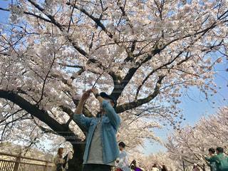 桜,大阪,大阪城公園,2018年4月