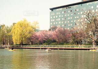 公園,春,桜,ボート,池,休日,のんびり,さくら