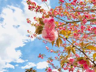 桜と空の写真・画像素材[1116746]