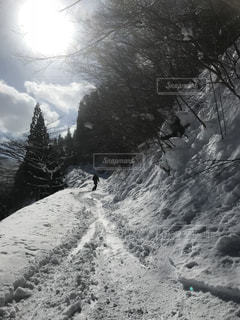 自然,冬,森林,散歩,雪景色,景色,スノーボード,休日の過ごし方