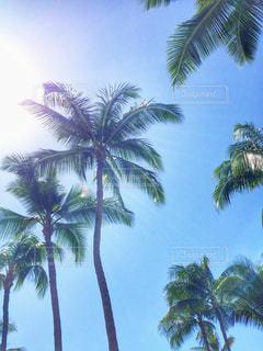 アメリカ,観光,旅行,ハワイ