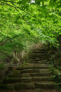 森の中 - No.1194753