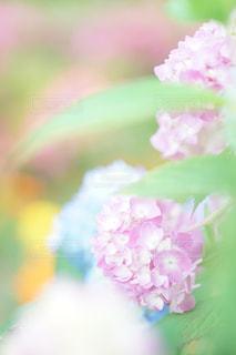 花,雨,森,緑,カラフル,黄色,紫陽花,ブルー,flower,梅雨,ボケ,blue,ふんわり,ピンク色,Green,pink,草木,yellow,エアリー,マクロ