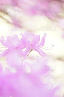公園,花,ピンク,ぼかし,flower,ボケ,ふんわり,ピンク色,pink,エアリー,マクロ