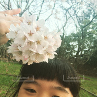 桜の頃🌸の写真・画像素材[1028048]