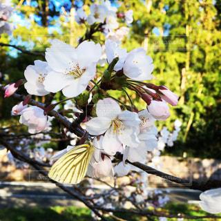 近くの花のアップの写真・画像素材[1130701]