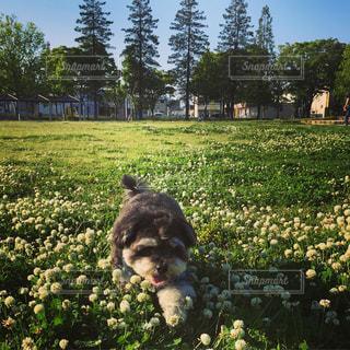 庭の小型犬の写真・画像素材[1212460]