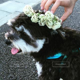 犬を持っている人の写真・画像素材[1212510]
