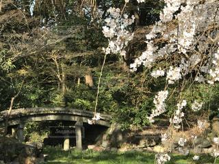 花,春,桜,橋,木,屋外,白,花見,景色,樹木,お花見,イベント,草木,桜の花,石橋
