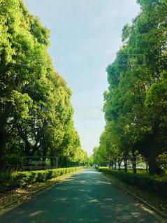 フォレスト内のツリー - No.1160304