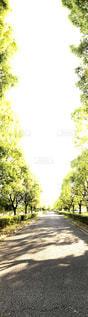 道の端に木のパスの写真・画像素材[1162392]