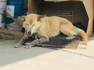 地面に横たわっている犬の写真・画像素材[1194442]