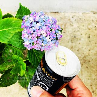 花を持っている手の写真・画像素材[1252910]