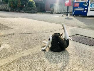 駐車場で座っている犬の写真・画像素材[1287754]