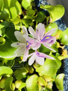 近くの花のアップの写真・画像素材[1374731]