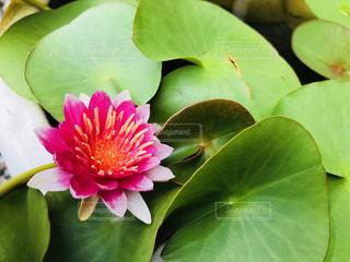 近くの花のアップの写真・画像素材[1375018]